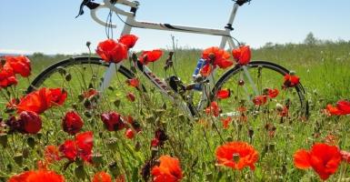 Velden vol klaprozen, een lust voor het oog in het voorjaar
