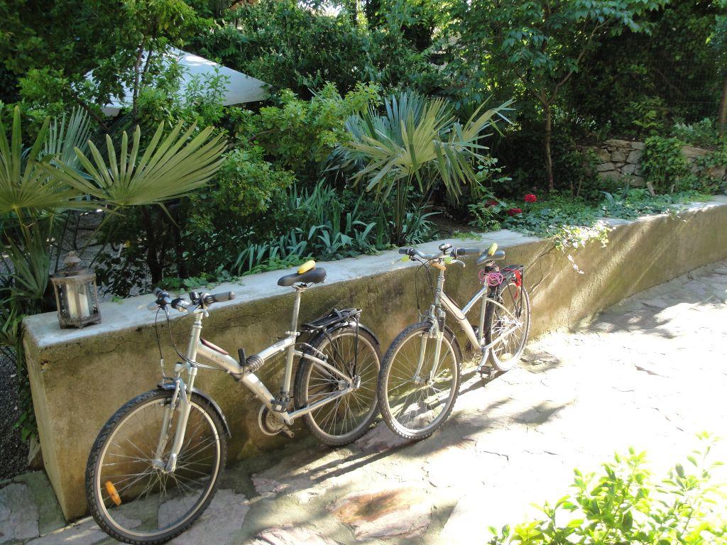 fietsen-met-banaan-verkleind