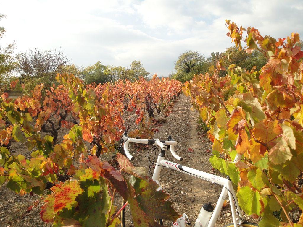 racefiets-in-de-herfst-wijngaard-verkleind