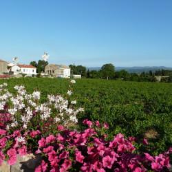 Vineyard around the corner
