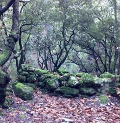 Randonnée féerique le long des Gorges d'Héric