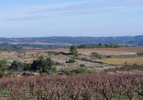 Grapevines without leaves in winter but also green in the landscape and beautiful views