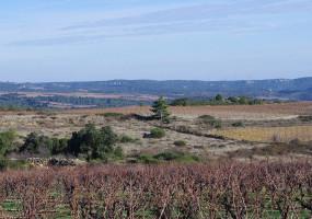 Des vignes sans feuilles en hiver mais encore des paysages verts et de belles vues.