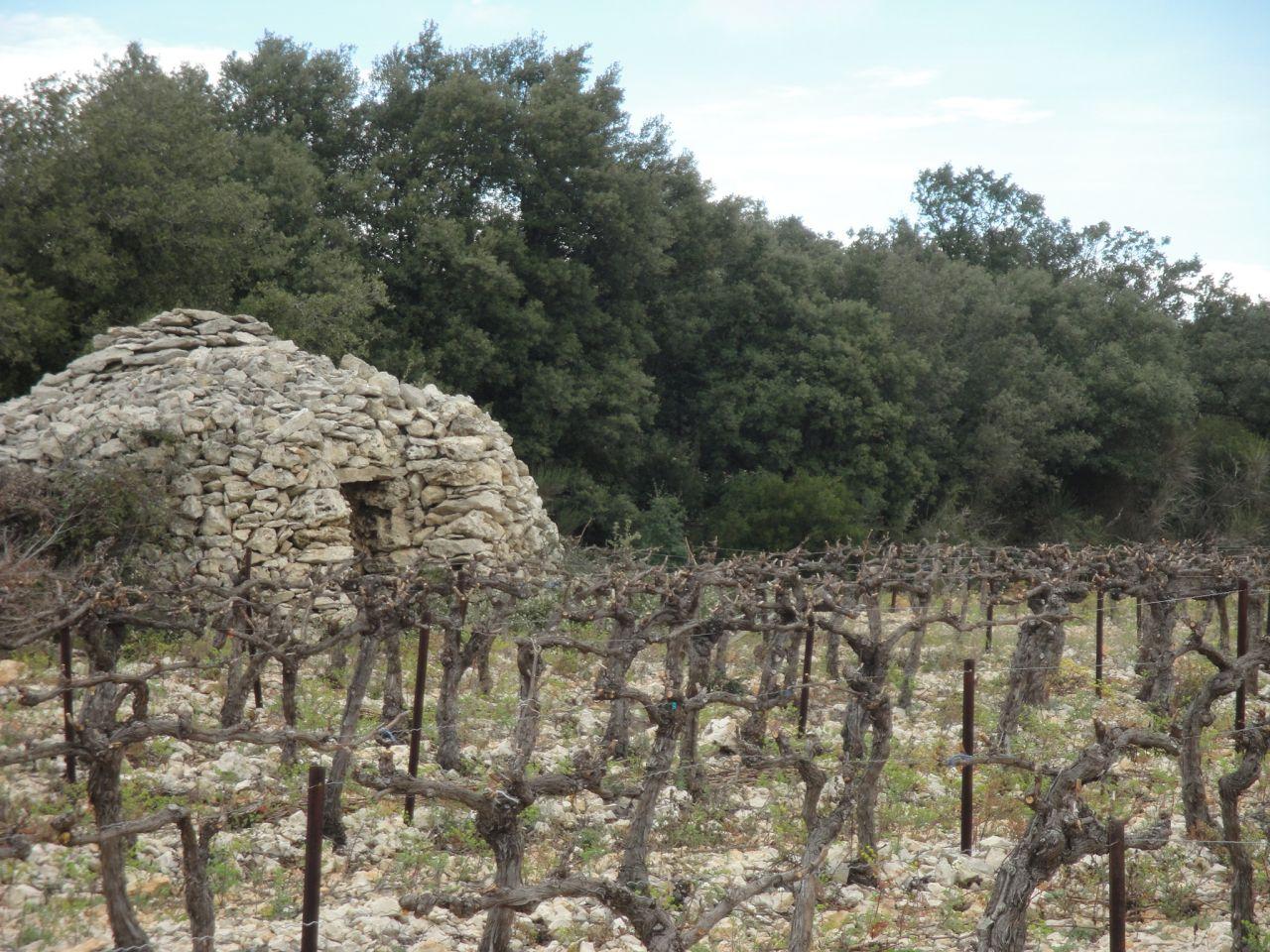 gesnoeide-wijnstronken-minervois