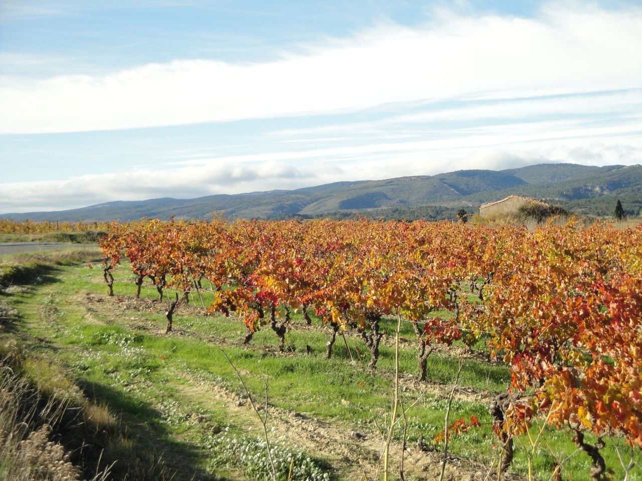 Wijngaard-in-herfstkleuren-Minervois