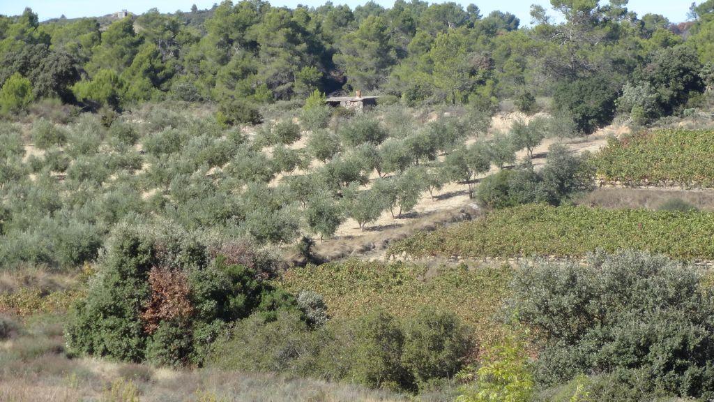 wandelen-Beaufort-Artix-vallei-olijfgaard