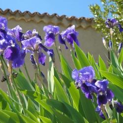 la-maison-chabbert-iris-01-1